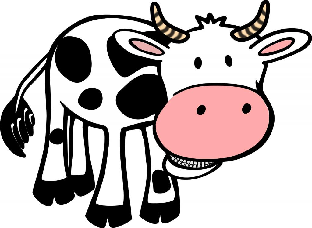 cow-48494_1280