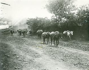 Transporte en mulas