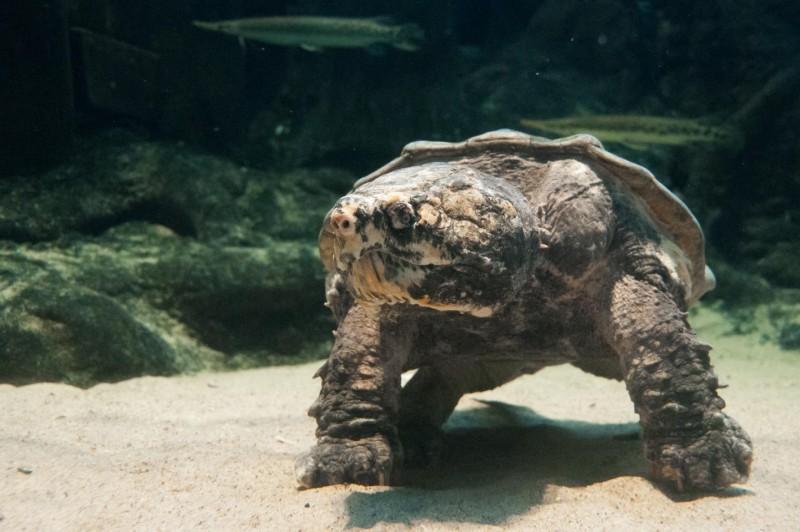 En qué se parecen una tortuga y un dinosaurio | Ciencia al día