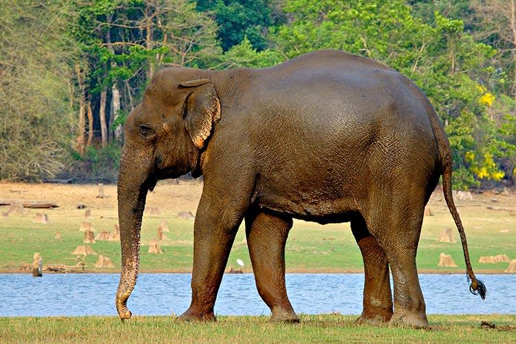 como viven los elefantes: