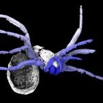La araña vista con la tomografía. Foto cortesía Garwood et al 2016 / Museum National d'Histoire Naturelle, Paris