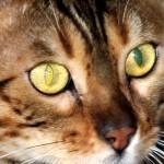 Cómo cazar, por un gato. Foto Manuel Saldarriaga