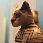 Gato momificado. Foto J. Ennis