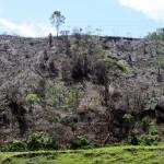 Tala en Antioquia. Foto Donaldo Zuluaga