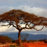Llanuras en Kenya. Foto Good Free Photos