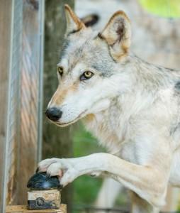 El perro en el experimento. Foto Rooobert Bayer