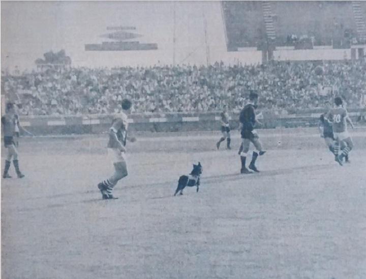Avanzan los verdolagas... y el perro también. Un mastín que venía del camerino de Nacional atravesó la cancha varias veces y entorpeció el desempeño de los jugadores. Se suspendió por minutos el juego mientras salía el can. Archivo: EL COLOMBIANO.