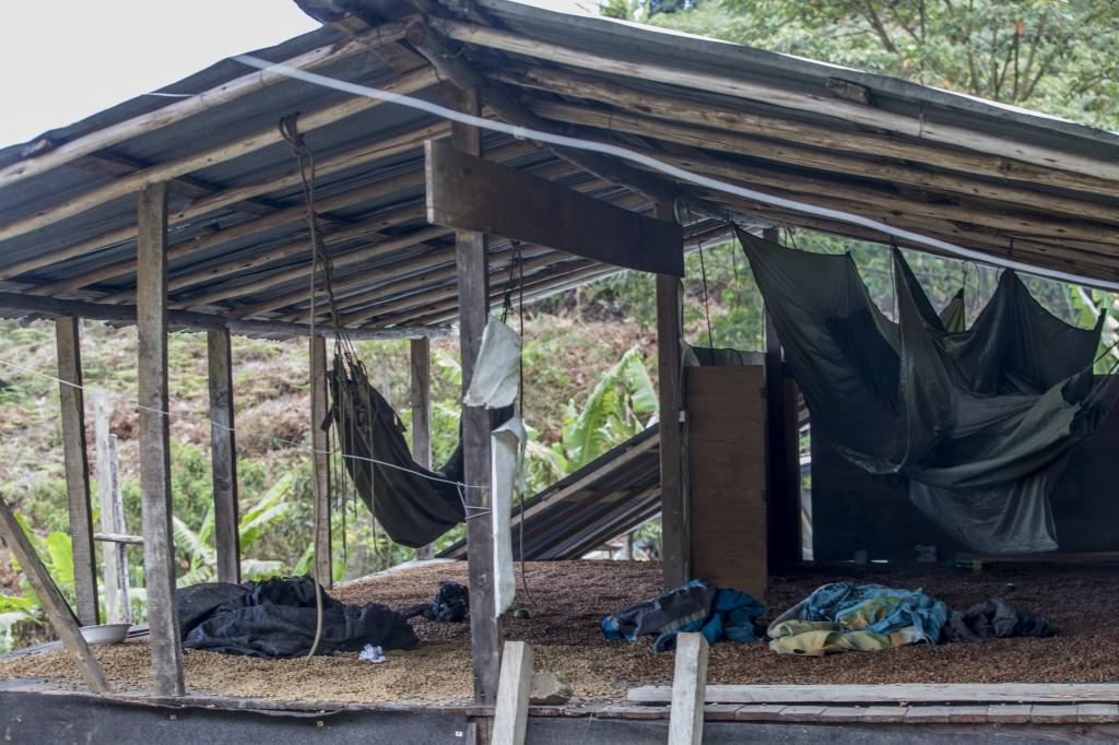 La base rural de la banda constaba de varios ranchos de tabla, los cuales construyeron en un antiguo secadero de café. Foto de Santiago Mesa.